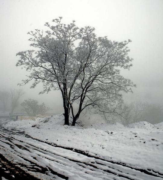 Snow & Tree Iran