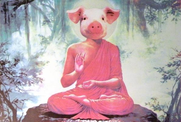 Buddha Pig